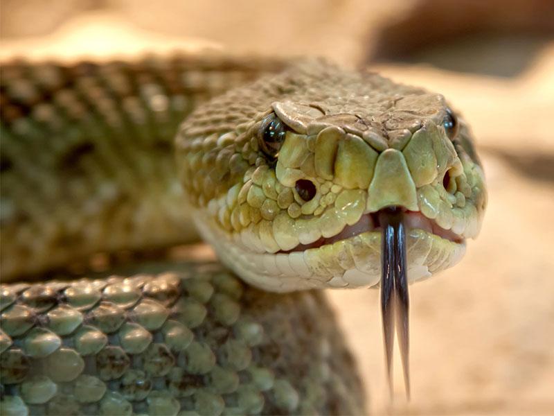 signe astrologique amérindien serpent