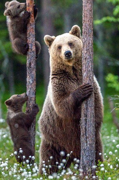 signe astrologique amérindien ours