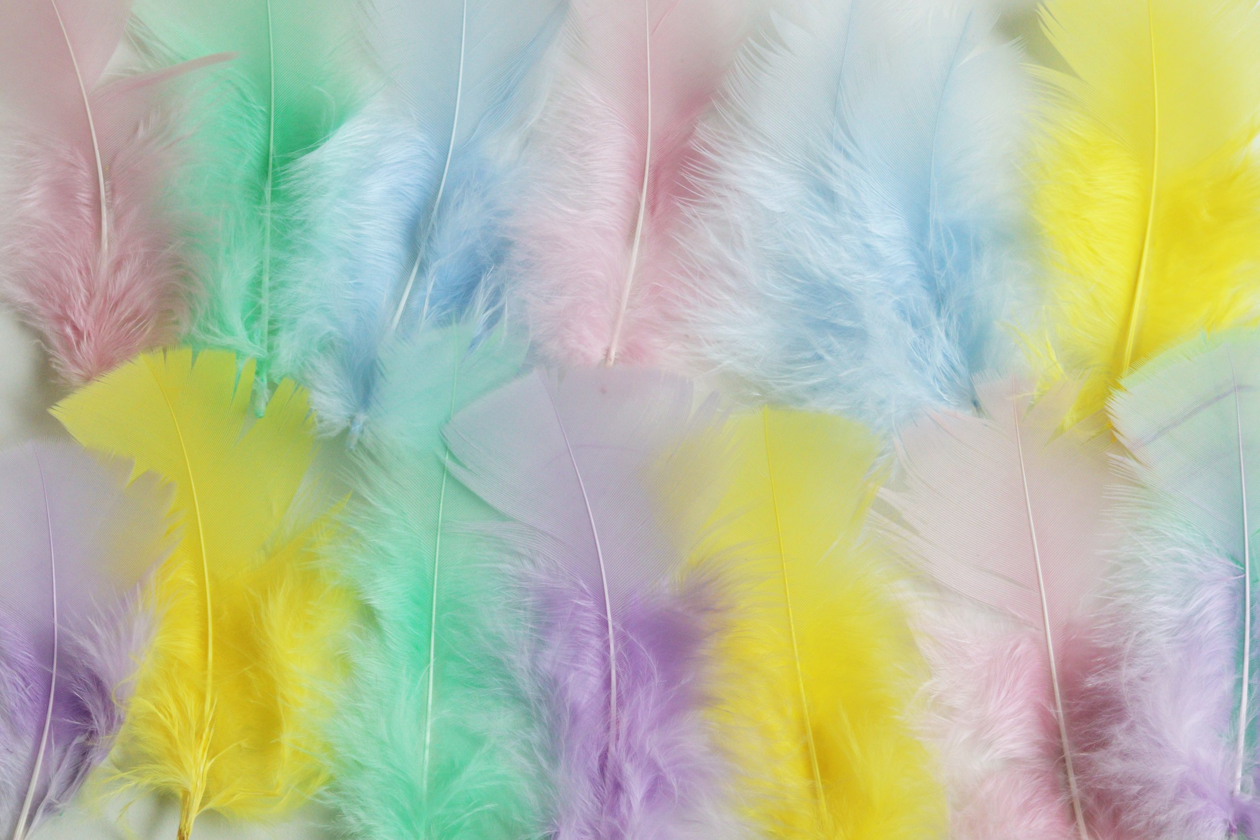 plume indienne couleur