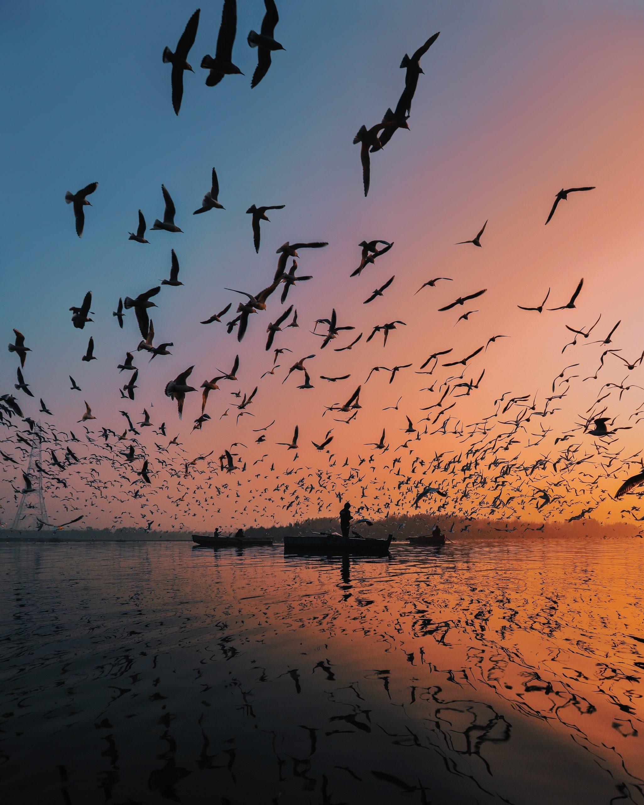 Les Oiseaux Amérindiens