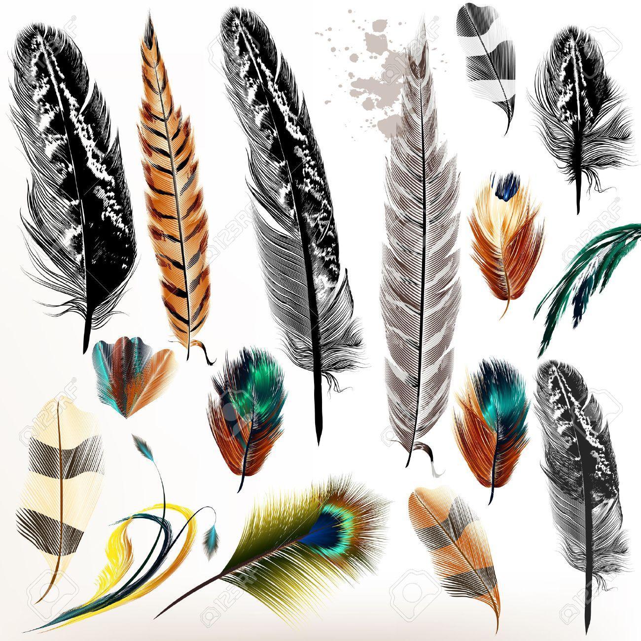 Plume Amérindienne Oiseaux
